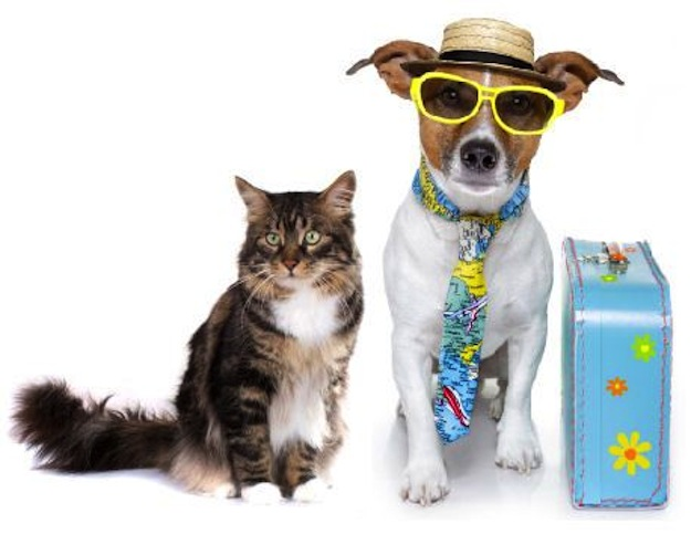 Traveling With Pets - Orlando International Airport MCO